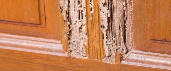 Daño por termitas